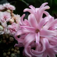 Весна-весна...Цветы-цветы... :: Галина К.