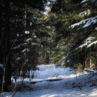 Зима не хочет уступать... :: Любовь Анищенко