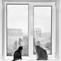 Первый снег ч/б :: Александр Буслов