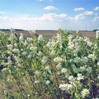 весенний цвет :: герасим свистоплясов