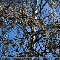 Весенний ветерок :: Ольга Маркова