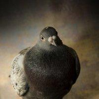 Портрет птицы :: Сергей &