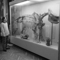 В музее природоведения :: Ростислав