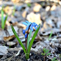 начало весны :: Alice Madman