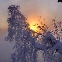 Утро туманное :: Галина