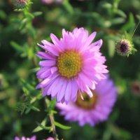 цветок :: Виктория Чуб