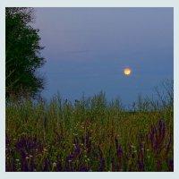 летний вечер :: герасим свистоплясов
