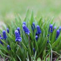 Красочная весна :: Никита Живаев
