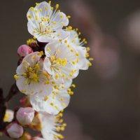 Весна :: Elyorjon Nematov