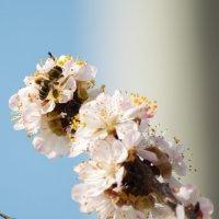 Пчела :: Elyorjon Nematov