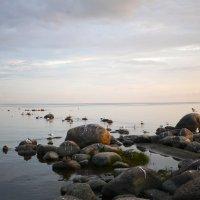 Тихий вечер.Берег Финского залива в Комарово. :: svetlana