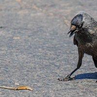 Охота на ящерицу :: Анатолий Клепешнёв