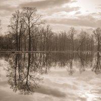 В реку смотрятся облака. :: Анна Тихомирова