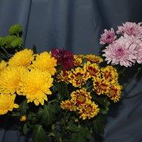 Все цветы :: Наталья Золотых-Сибирская