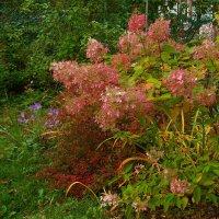 Осенние цветы :: Aнна Зарубина