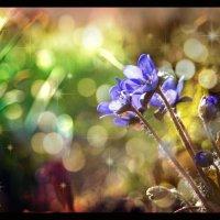 В королевстве синих цветов.... :: Елена Kазак