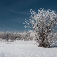 Зимний букет :: Дмитрий TDAdiz