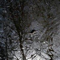 Птица плавающая на дереве :: Евгений Юрков