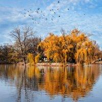 птицы ... :: Юлия Густерина ...