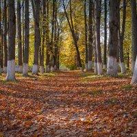 Осенний парк :: Андрей Словин