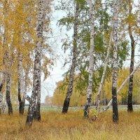 Осень :: Галина Мухина