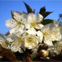 Весна во всей красе :: Татьяна Пальчикова