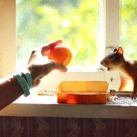 Белка захотела вкусить яблоко) :: Анастасия Володина