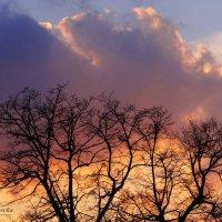 Яркий закат. :: Антонина Гугаева