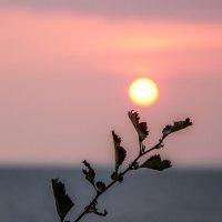 солнце :: Dmitry i Mary S
