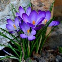 Весна :: Вадим Карповский