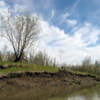 Берег реки Листвянка :: Сергей Карцев