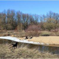 Весенний пейзаж с собакой и двумя отдыхающими :: Елена Федотовская