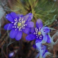 Первые цветы :: Evgenij Schleinikov