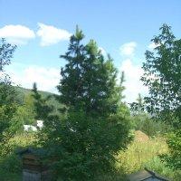 лес :: Светлана Тычук