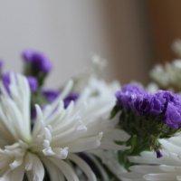 цветы :: мария шведа