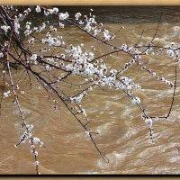 Весенняя вода..... :: Юрий Владимирович