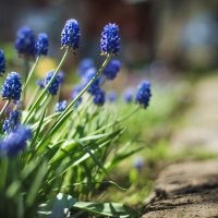 весна :: Irina Evushkina