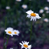 Usual flowers. :: Veronika Gorina