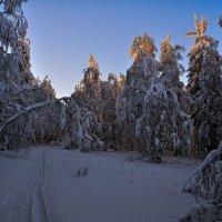 Вечерний лес :: vladimir