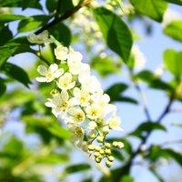 Весна, весна.... :: Людмила Ермоленко