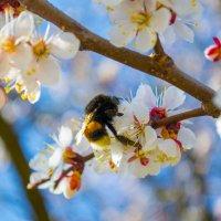 пришла весна) :: Vasyl xaos