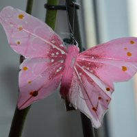 Бабочка :: Евгений Пак