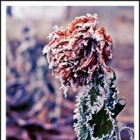 Замёрзший цветок :: Igor Zhabskiy