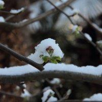 А казалось, что зимы не будет. :: Larisa Gavlovskaya