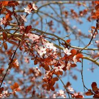 весна :: Svetlana Plasentsiia