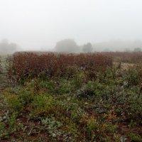 осенний туман :: Андрей ЕВСЕЕВ