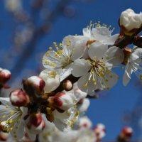 Весна :: Светлана ```````
