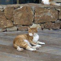 кошки отеля 2 :: Лидия кутузова