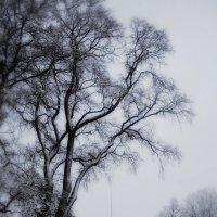 Зима у Петропавловки 2 :: Цветков Виктор Васильевич