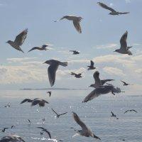 Чайки :: Джейхун Мамедбейли